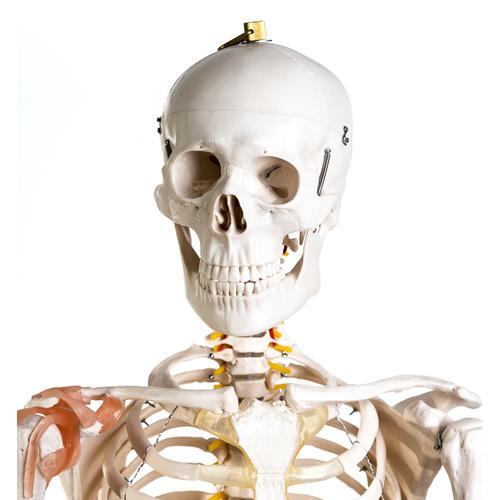 Jack Skelett